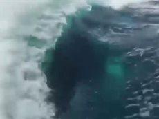 Погоня китов убийц за катером.
