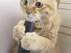 Смешные кошки  2017.