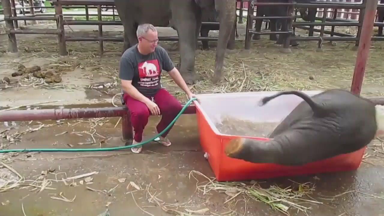 Неуклюжий слонёнок взорвал интернет, искупавшись в ванне.