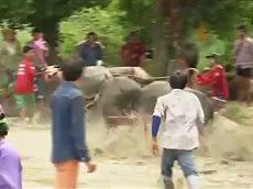 В Таиланде прошли гонки на буйволах.